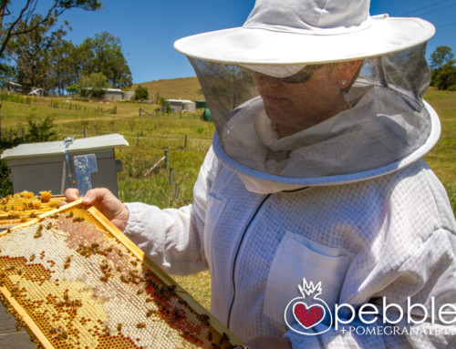Hum Honey… a passion for bees, honey and the Sunshine Coast