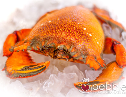 Fraser Isle Spanner Crabs… succulent sea treasures from Fraser Island's coastal waters