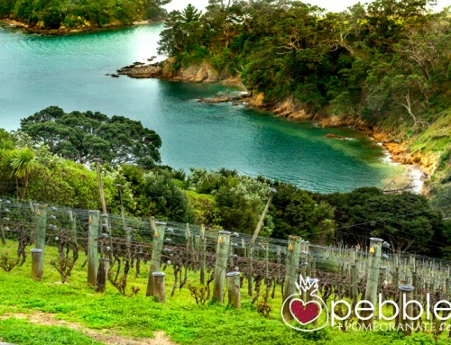Waiheke Island – Glorious Countryside, Sensational food and Fabulous Wines