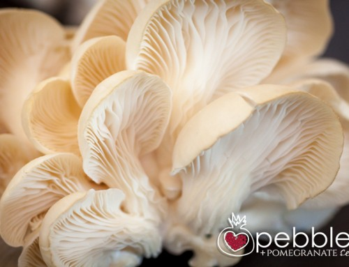 Noosa Earth – Urban Oyster Mushroom Farming at its best – FAN Farm Visit