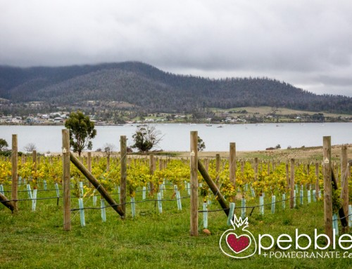 Bangor Wine & Oyster Shed… a match made in Tasmania's food and wine heaven